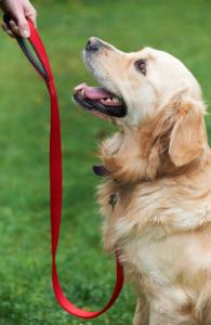 Nigel's Doggy Training, Victory Halll, Mobberley